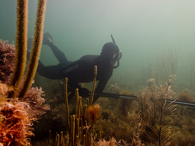 5 things to know before you start spearfishing