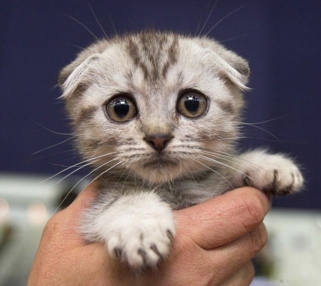 Sorry Kitten