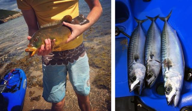 wrasse fishing kayak cornwall