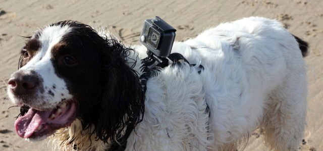 Kurgo GoPro Camera Dog Mount