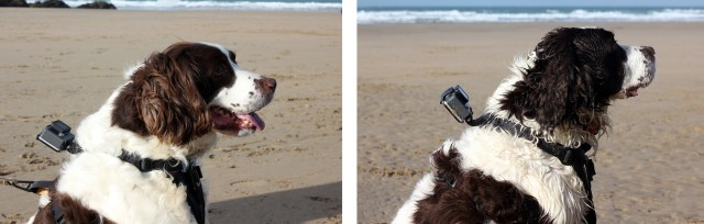Kurgo GoPro Dog Mount Water