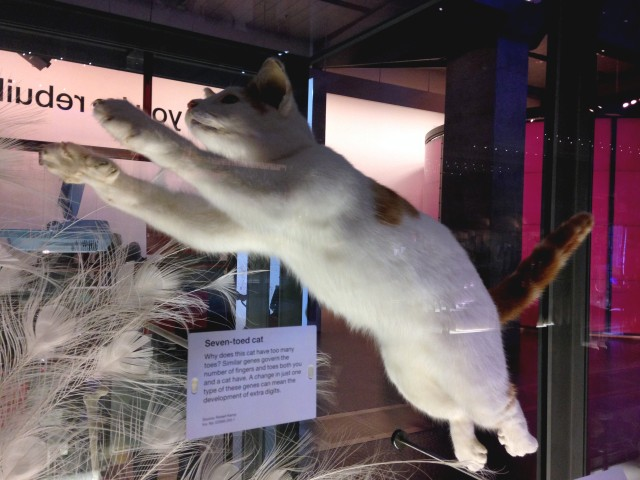 Seven Toed Cat Science Museum
