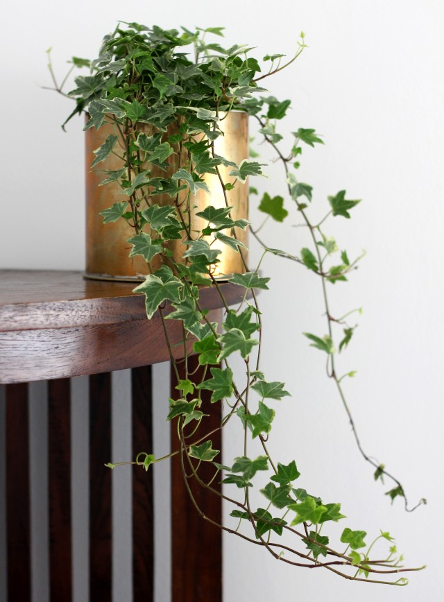 Flower Pot Ivy Brass
