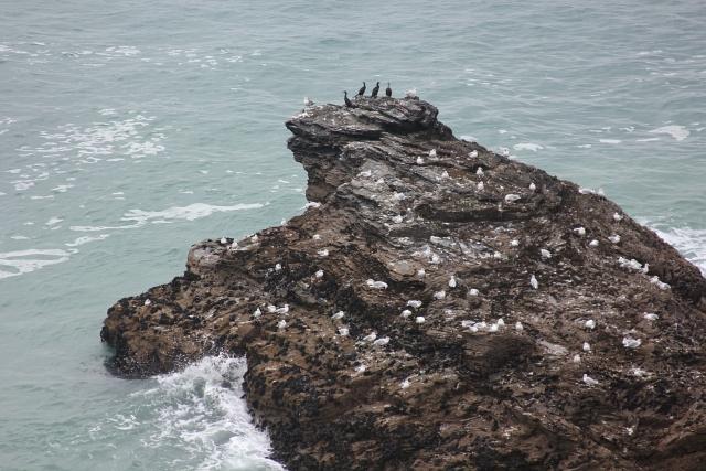 Shag Rock Porth Cadjack
