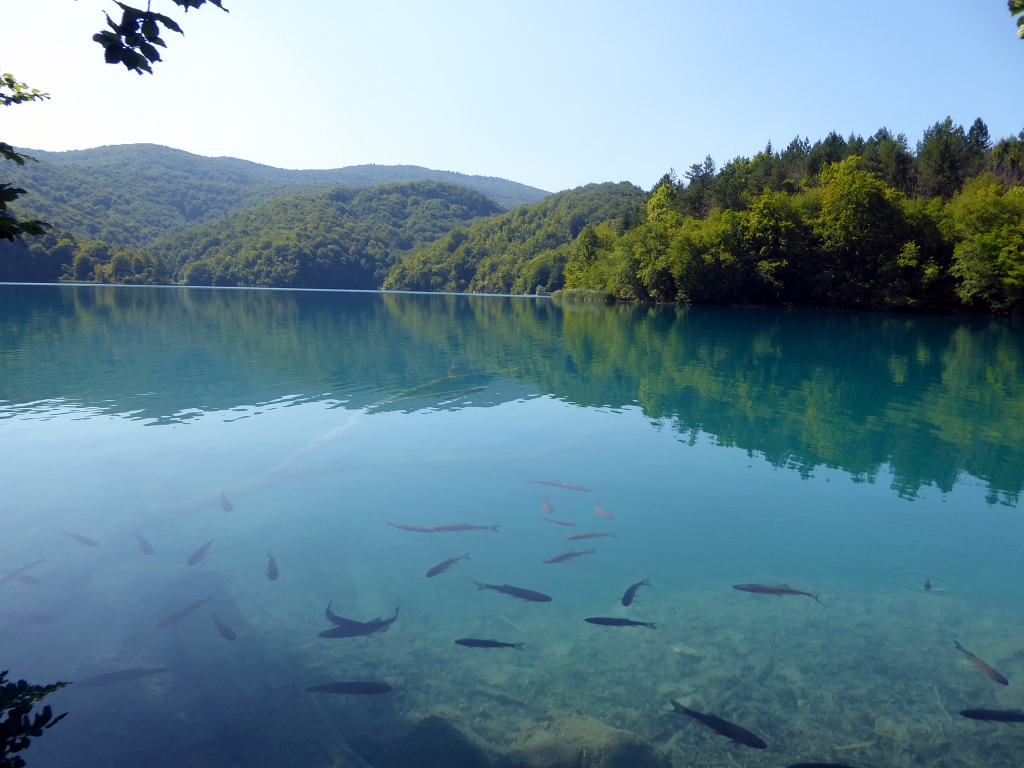 Plitvice Lakes Fish Croatia