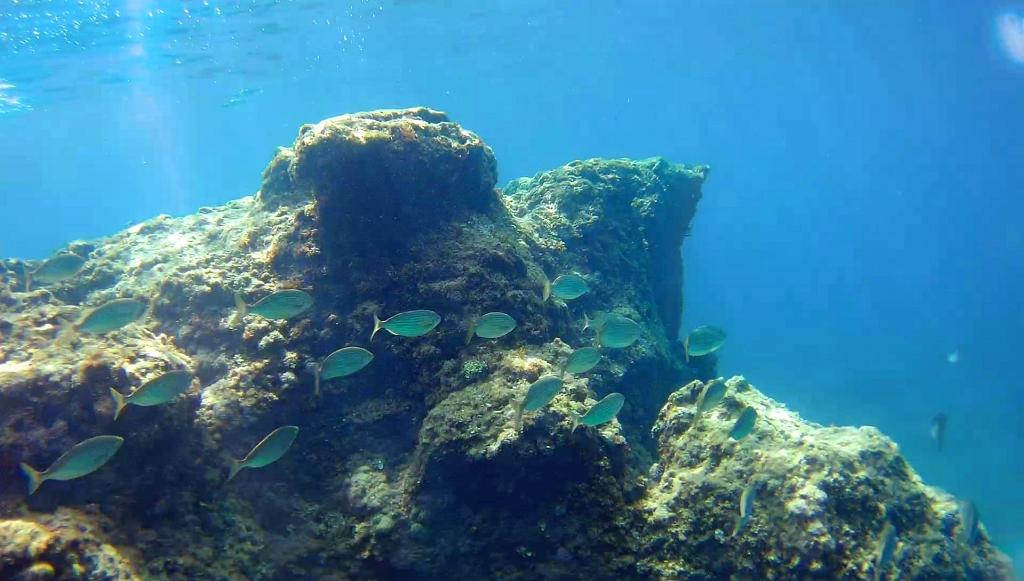 Dubrovnik Fish Snorkelling