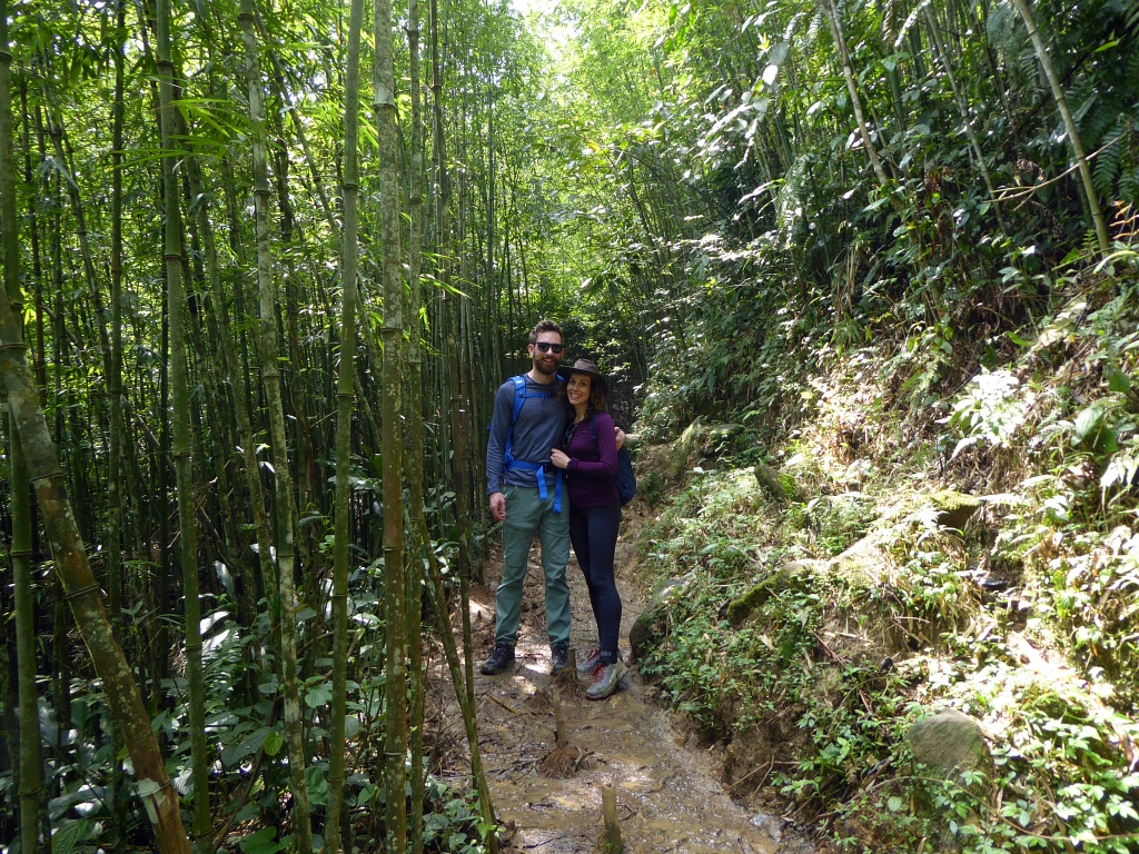 Sapa Mountains Bamboo Forest
