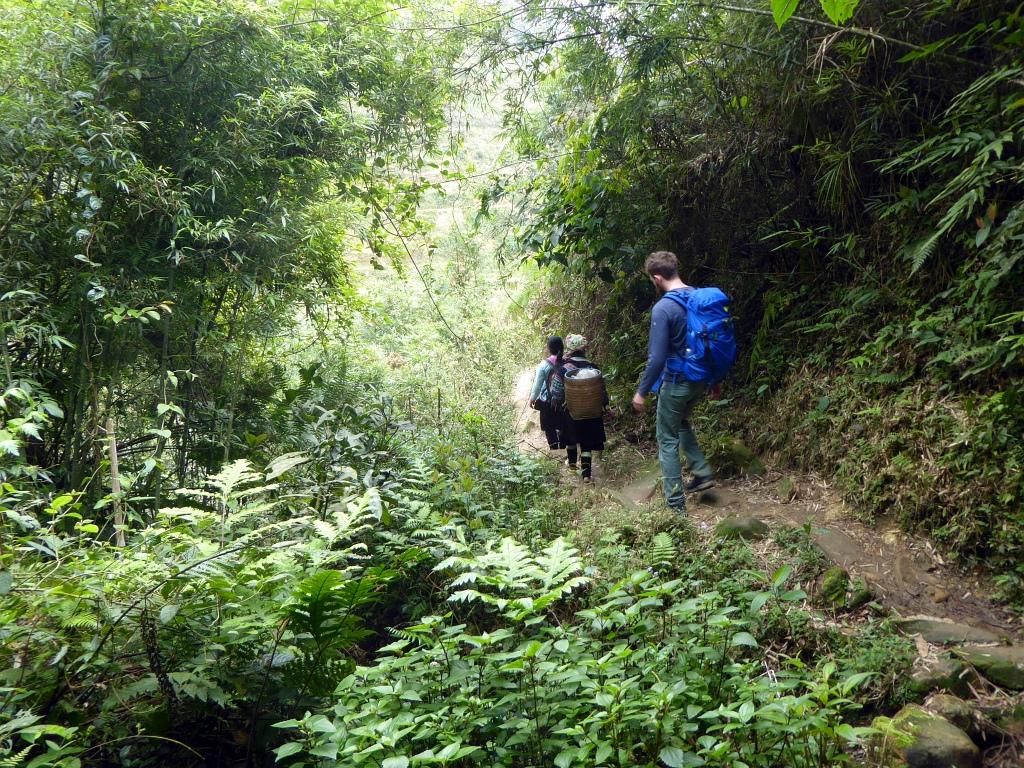 Sapa Mountains Jungle