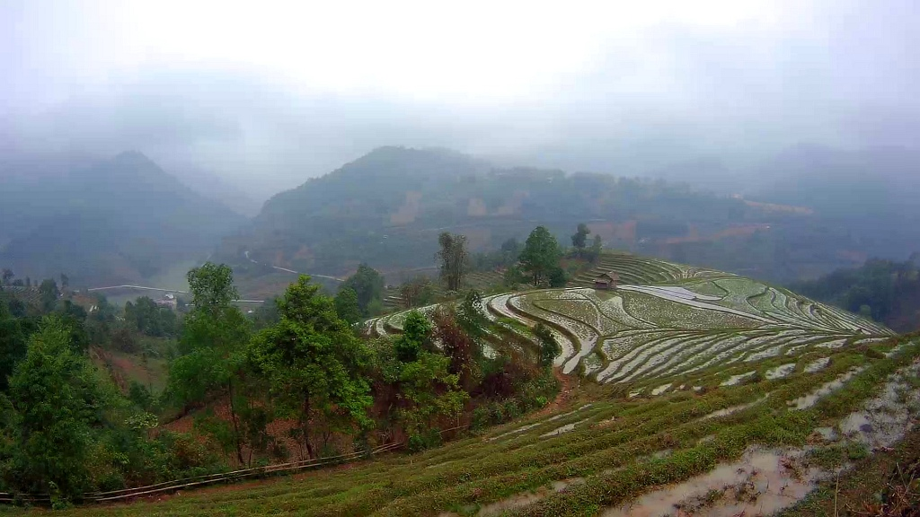 Sapa Mountains Rice Paddy
