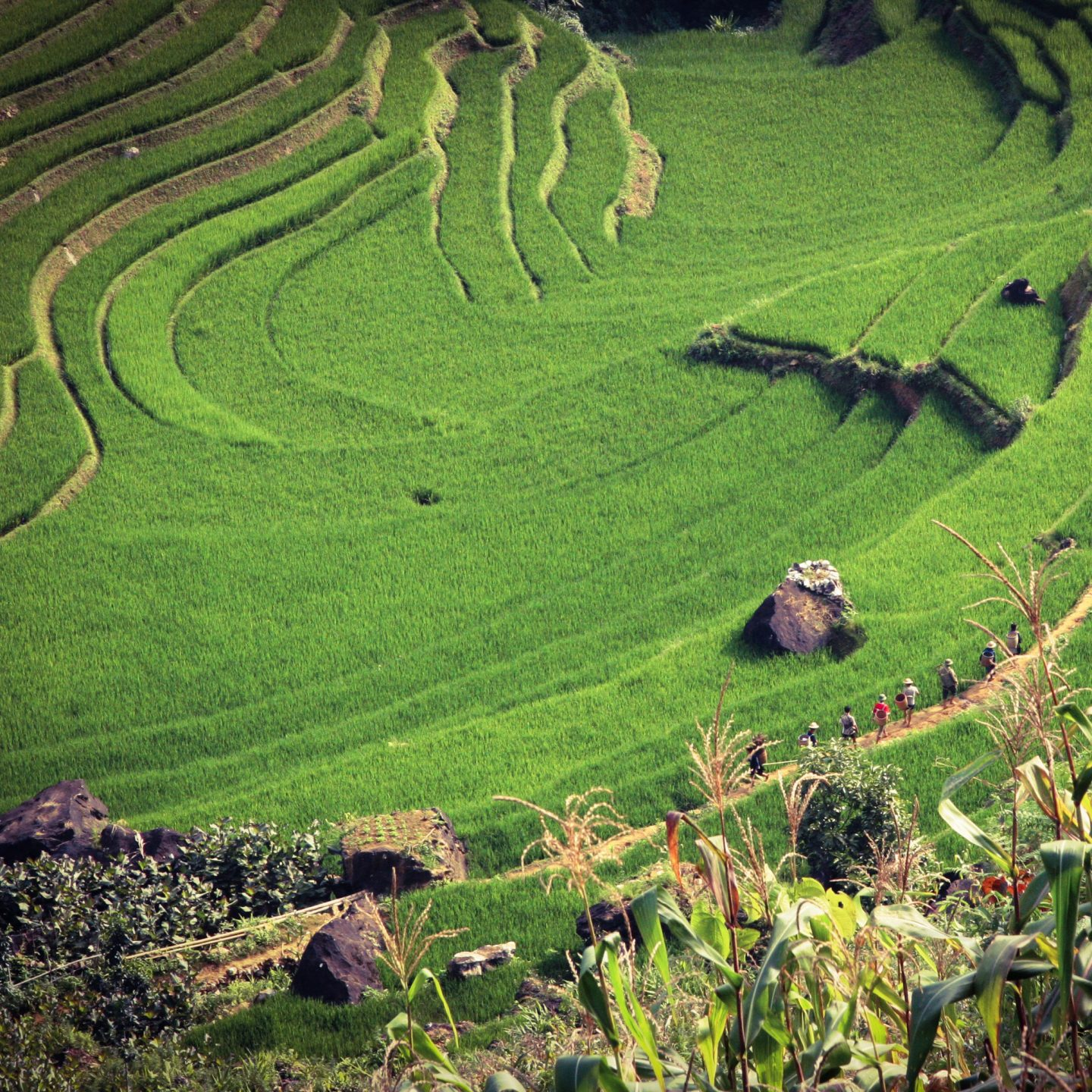 The Best Activities In Vietnam For Adventurous Travellers