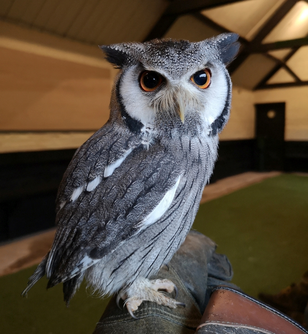 Buyagift Falconry Experience for Two at Yarak Birds Of Prey Review